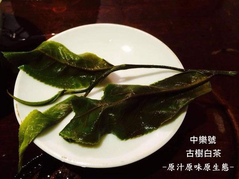 中樂號最原汁原味原生態的古樹<a href=http://zlhtea.com/baike/White_Tea target=_blank class=infotextkey>白茶</a>